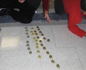 Turtle sorting, turtle graphing, turtle mania!