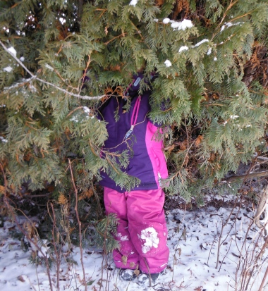 child hiding in/camouflaged by cedar trees