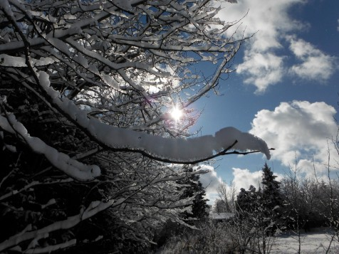 snow covered branch, sun and clouds