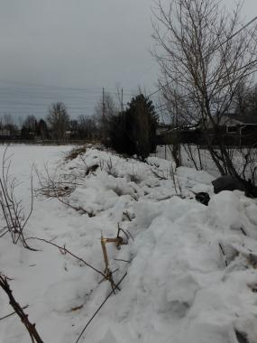 piles of snow and sticks, grey sky